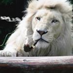 http://www.carathai.com/Upload/avatars/nina/nina17.jpg